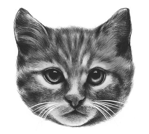Cat Face Sketch T-Shirt
