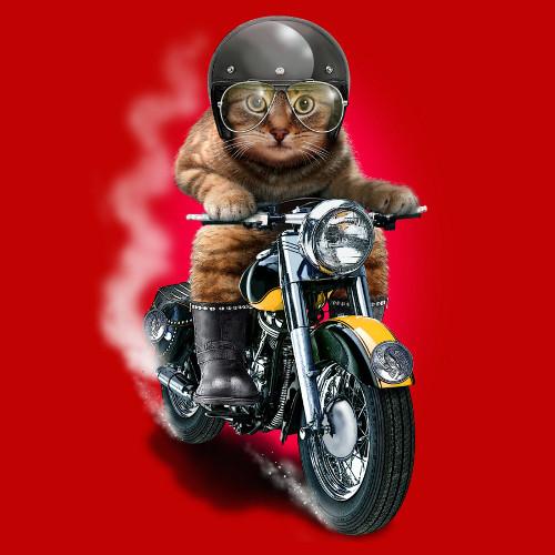 Hellrider Cat Motorcycle T-Shirt
