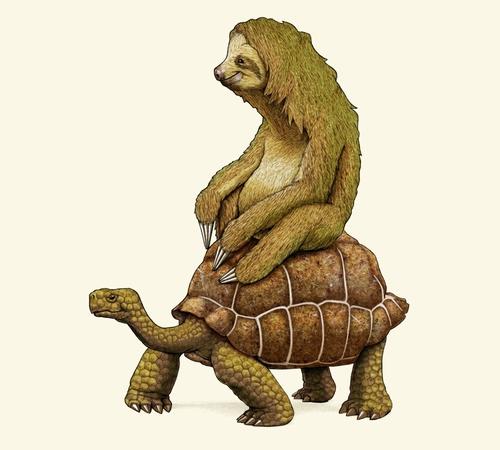 Sloth Riding Tortoise Turtle Funny T-Shirt